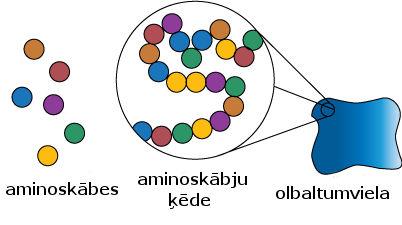 aminoskabes