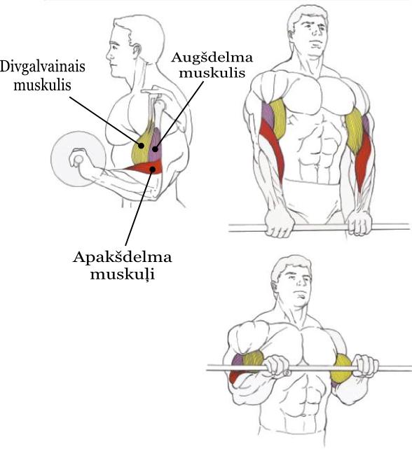 Stiena_celsana_uz_bicepsu_virstveriena