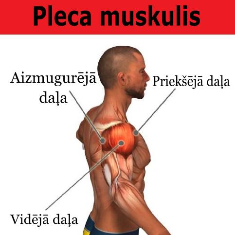 pleca_muskulis