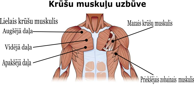 krusu_muskula_uzbuve