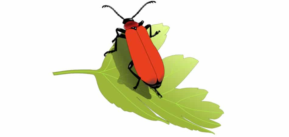 Kukaiņu proteīns